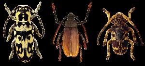 insectes-rampants