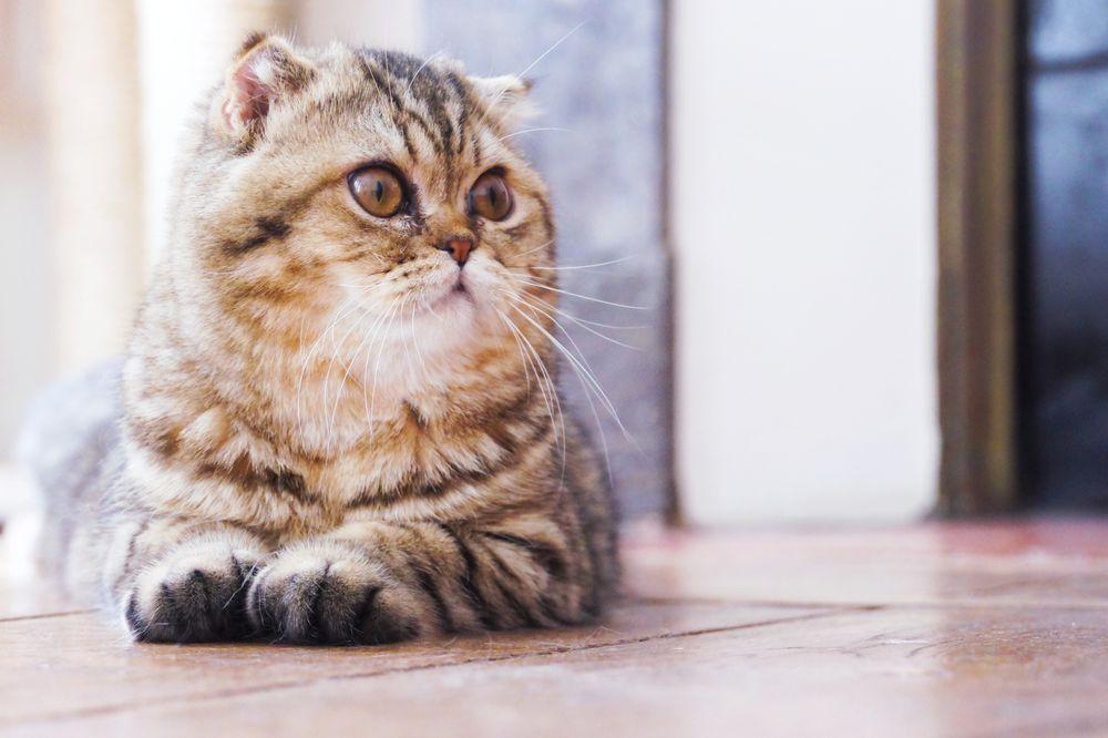 cliche-mignon-chats-johnny-1